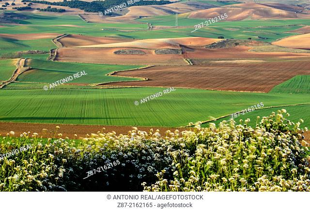 Fields, La Hinojosa, Cuenca province, Castilla-La Mancha, Spain