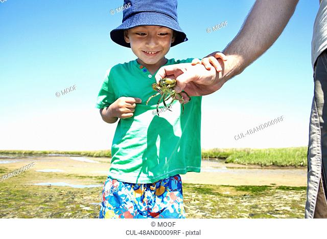 Boy examining crab in fathers hand