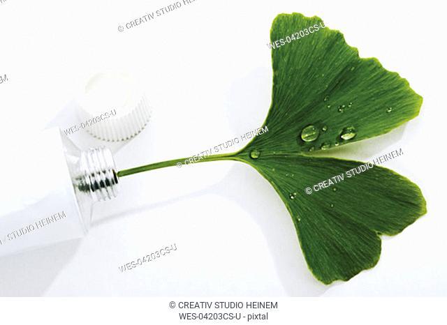 Ginko leaf in tube