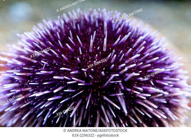 Sea urchin in aquarium