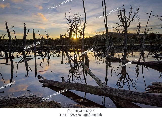 South America, Patagonia, Chile, Magallanes y la Antarctica, Tierra del Fuego, Lago Blanca, lake, beaver in pond at sunset, (m)