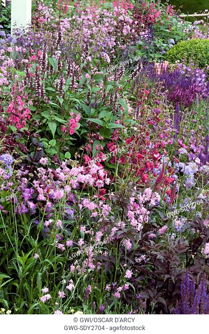 MAUVE PINK AND RED BORDER