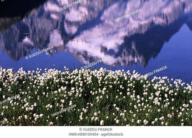 France, Hautes-Alpes (05), La Meije is reflected in lake Goleon at 7 998,69 ft in Oisans massif