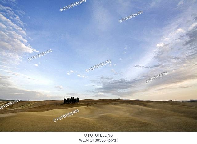 Italy, Tuscany, Val d'Orcia, Cypresses trees on hill