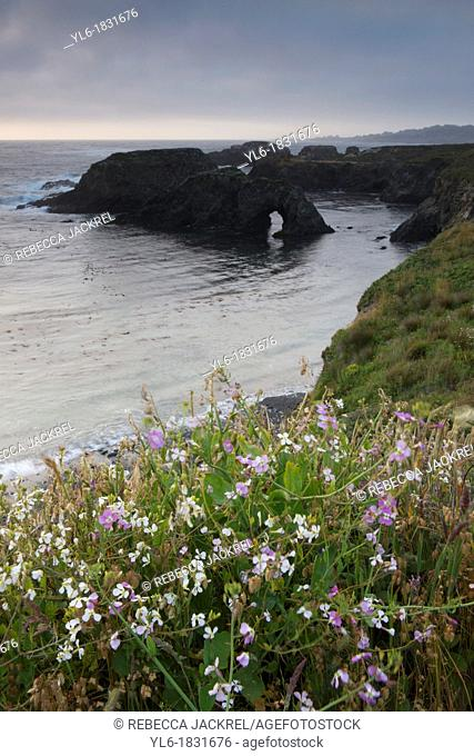 Wildflowers along the Northern California coast
