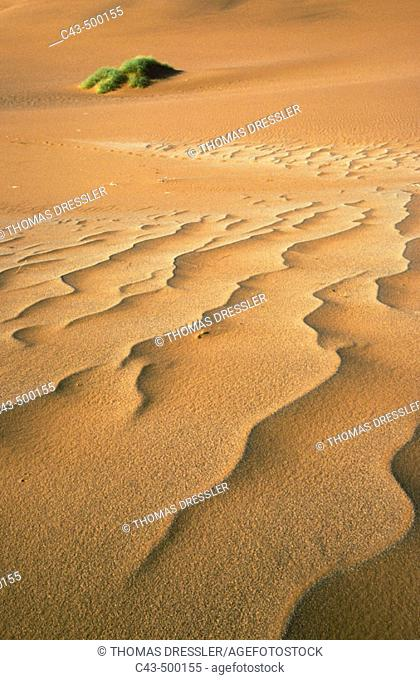 Structural forms in the sand of the Namib Desert and a nara bush (Acanthosicyos horrida) in the background. Namib-Naukluft Park, Namibia