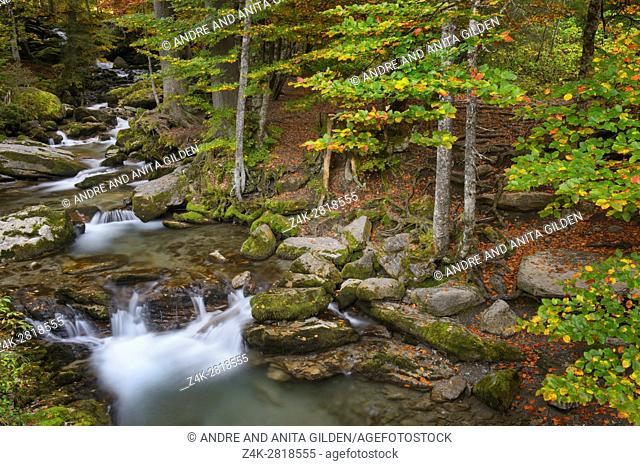 Autumn in the forest with colorful leaves and a mountainstream, Haute Savoie, France