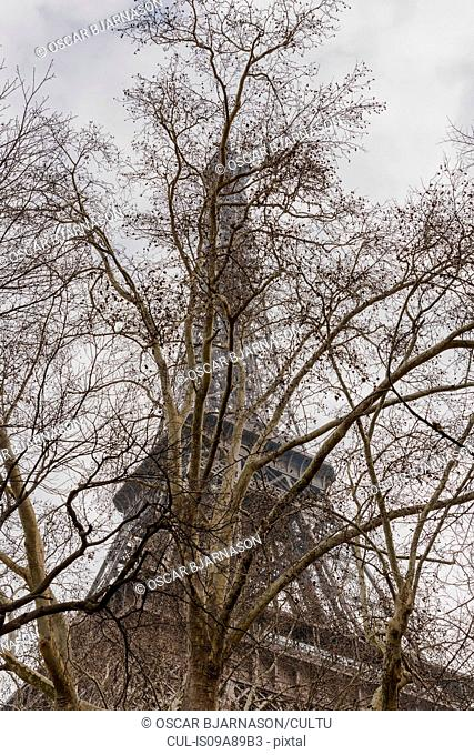 Bare tree and Eiffel Tower, Paris, France