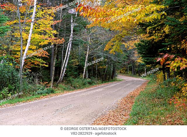 Forest road, Green Mountain National Forest, Vermont