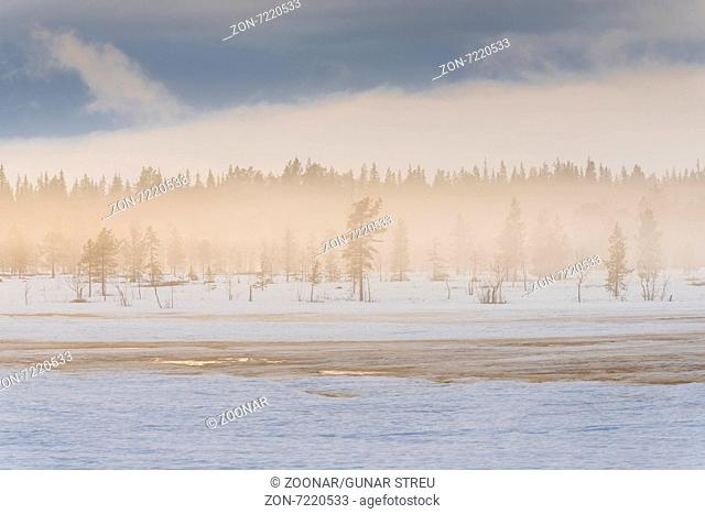 foggy mood in a swamp, Lapland, Sweden