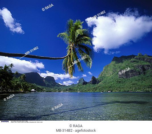 French Polynesia,  Moorea Island, Cook's Bay