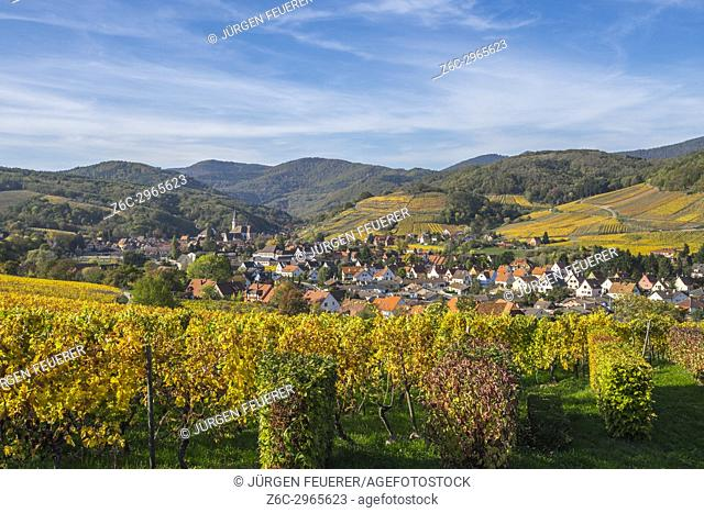 village Andlau embedded between surrounding vineyards in autumn colors, foothills of the Vosges Mountains, on the Wine Route of Alsace, France