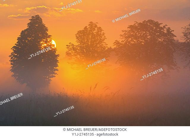 Trees in morning mist at sunrise, Hesse, Germany, Europe