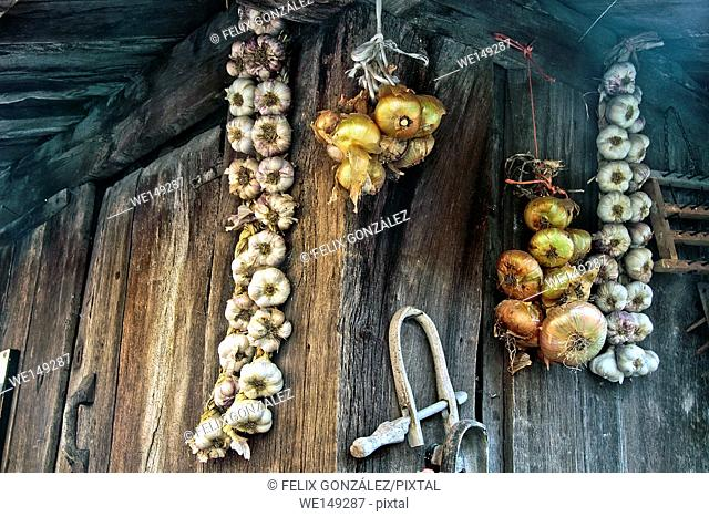 Onions and garlics in a horreo, Asturias, Spain