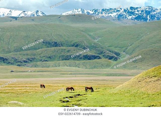 Three horses grazing near stream in mountains