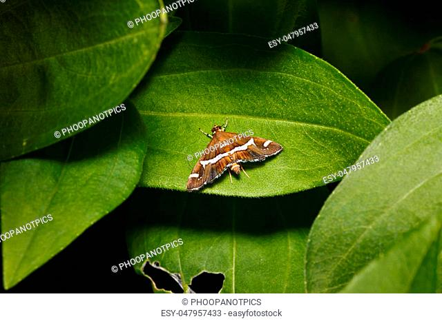 little insect on leaf