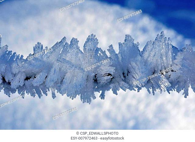 Fine ice crystals on a small tree branch