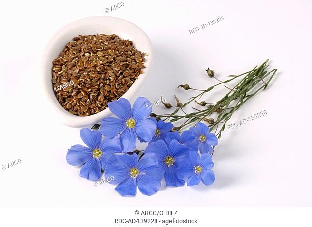 Blue Flax and linseed Linum perenne Perennial Flax