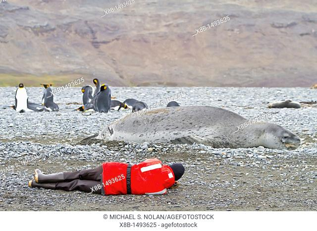 Staff from the Lindblad Expedition ship National Geographic Explorer shown here is Expedition leader Lisa Trotter with a HUGE leopard seal working on South...