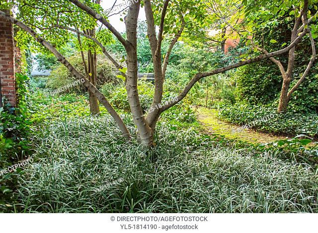 New York City, NY, USA, 'The Hoyt Street Garden' Community Garden in Brooklyn