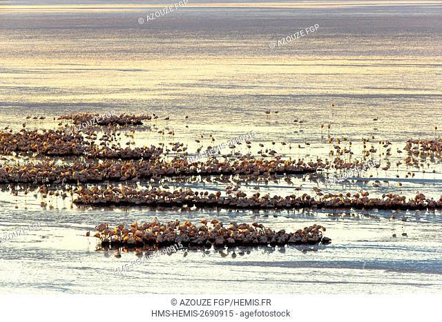 Bolivia, Daniel Campos Province, Potosi, Salar de Uyuni, Colchani, flamingos (aerial view)