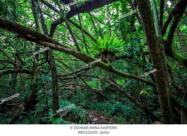 Jungle on South Pacific island Rarotonga