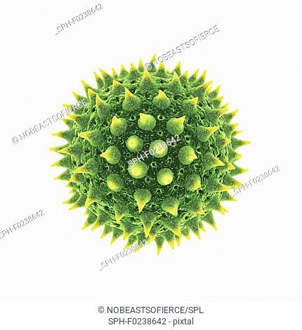 Pollen grain, illustration