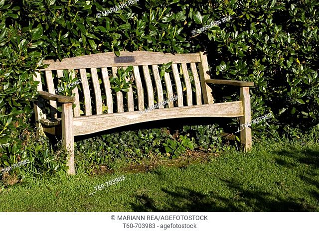 A bench in the bushes, Lady Dixon park, Northern Ireland