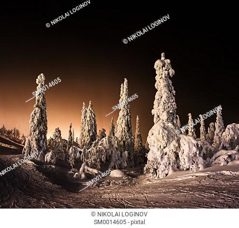 Orange Finnish winter forest