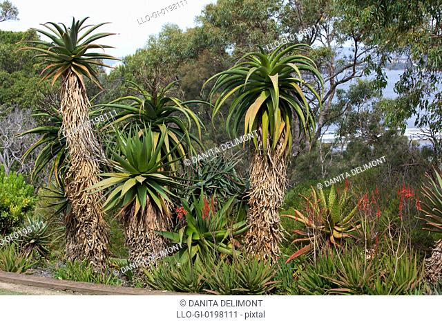 Various trees in botanic garden, Kings Park, Perth, Western Australia, Australia
