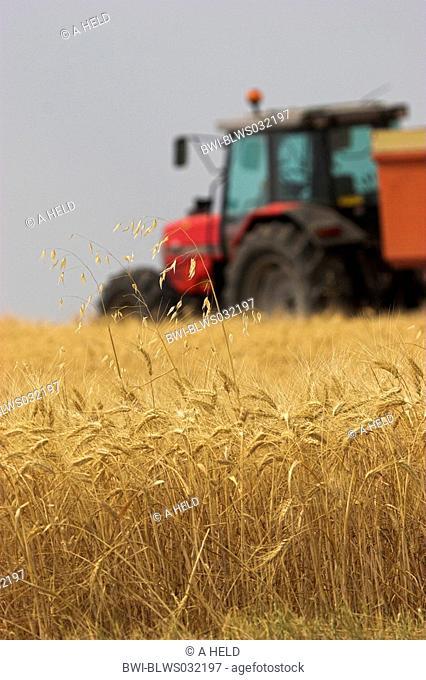 barley Hordeum spec., with harvester, France, Provence