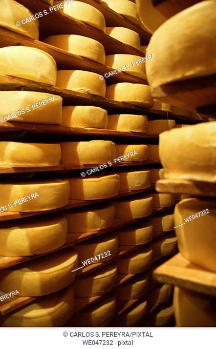Menonnite cheese Dairy.  Chihuahua, Mexico