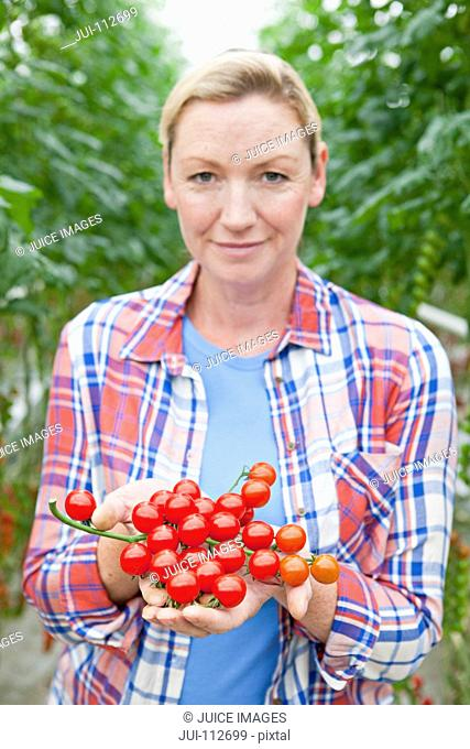 Close up portrait grower holding ripe red vine tomatoes