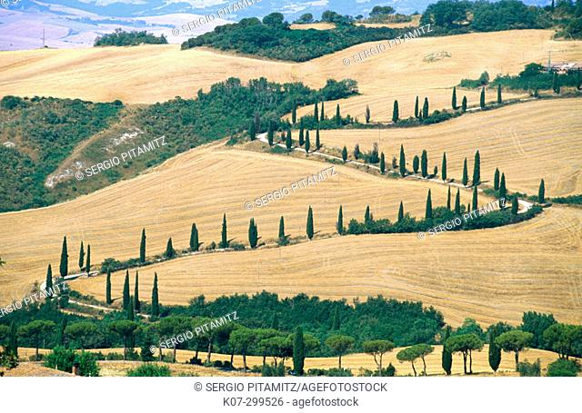 Cypress trees along rural road. Siena province. Tuscany, Italy