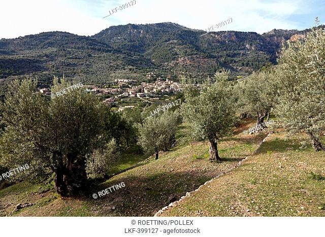 Most beautiful village in Spain, Fornalutx, valley of oranges, olive trees, Fornalutx, Serra de Tramuntana, UNESCO World Nature Site, Mallorca, Spain