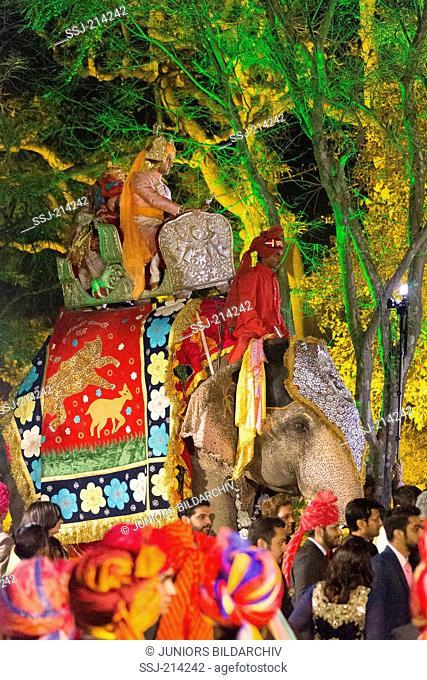 Asian Elephant (Elephas maximus indicus). Elaborately decorated riding elephnat of the groom on a Royal wedding. Jaipur, Rajasthan, India