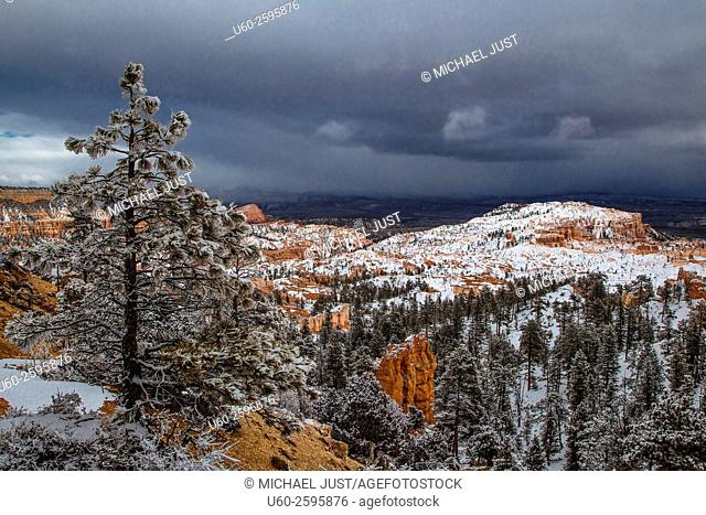 A fresh blanket of snow has covered the landscape at Bryce Canyon National Park, Utah