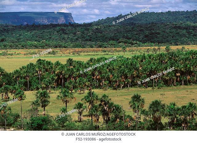 Sabana. Canaima National Park. Venezuela