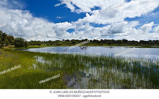 Monfrague National Park, Caceres, Extremadura, Spain, Europe