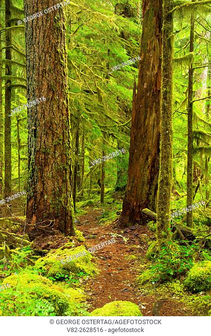 Warm Springs Trail, Willamette National Forest, Oregon