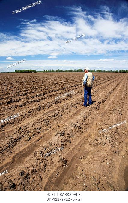 Farmer standing in a conventionally tilled field after harvest with furrows for irrigation; England, Arkansas, United States of America