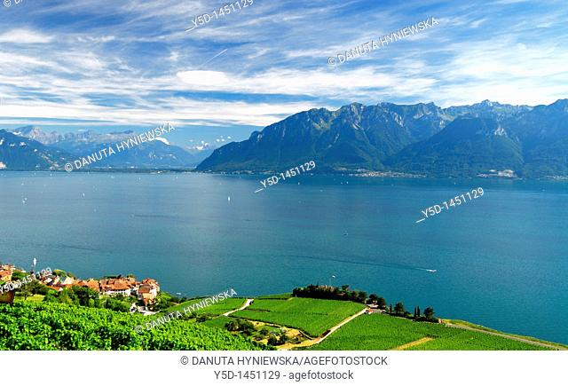 Vineyards in Lavaux, Vaud canton, Geneva Lake, Switzerland, Unesco Heritage, view for Alps
