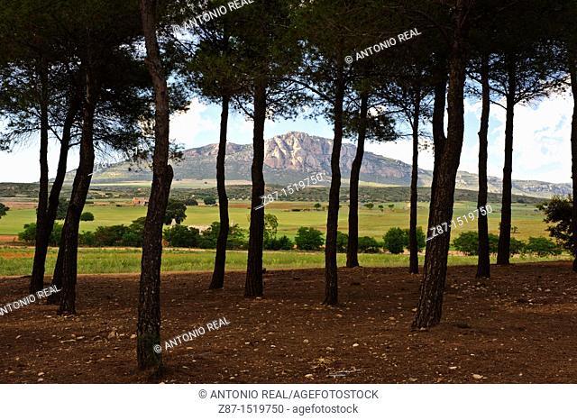 Sierra de El Mugrón, Almansa, Albacete province, Castilla-La Mancha, Spain