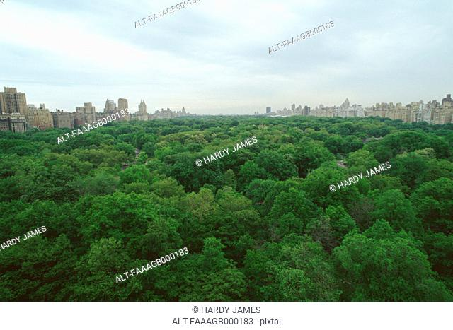 New York, Manhattan, Central Park, treetop view