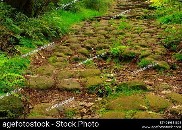 Nasser Grund Weg - wet ground way 01