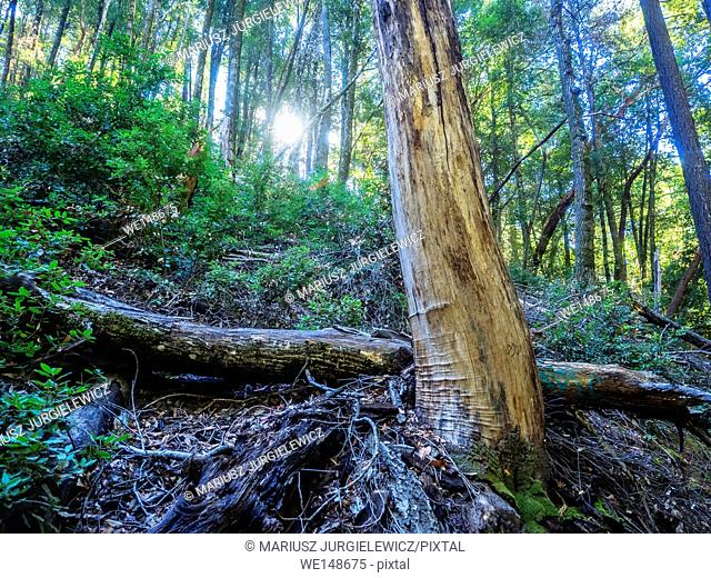 Castle Rock State Park is a state park located along the crest of the Santa Cruz Mountains. It embraces coast redwood, Douglas fir, and madrone forest