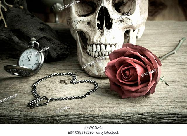 Still life with human skull with red rose bud ,metal chain in heart shape and pocket watch