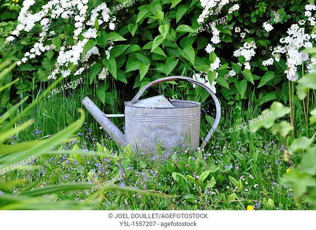 Zinc watering can in the alley of the garden in spring