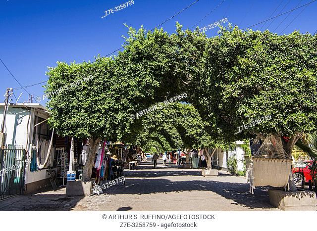 Arbors shading the historic downtown center of Loreto. Loreto, Baja California Sur, Mexico
