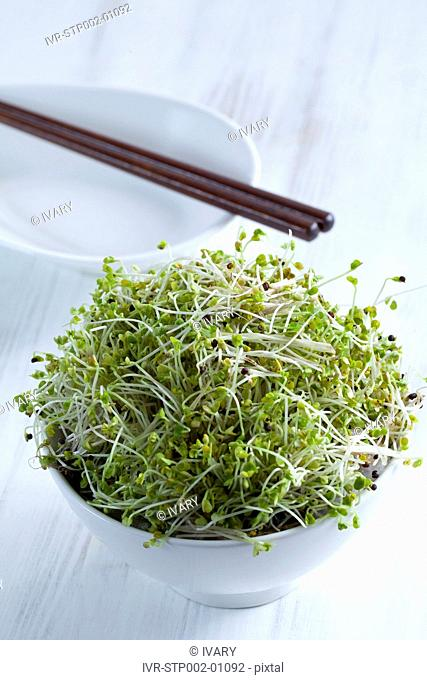 Organic Sprouts In A Bowl
